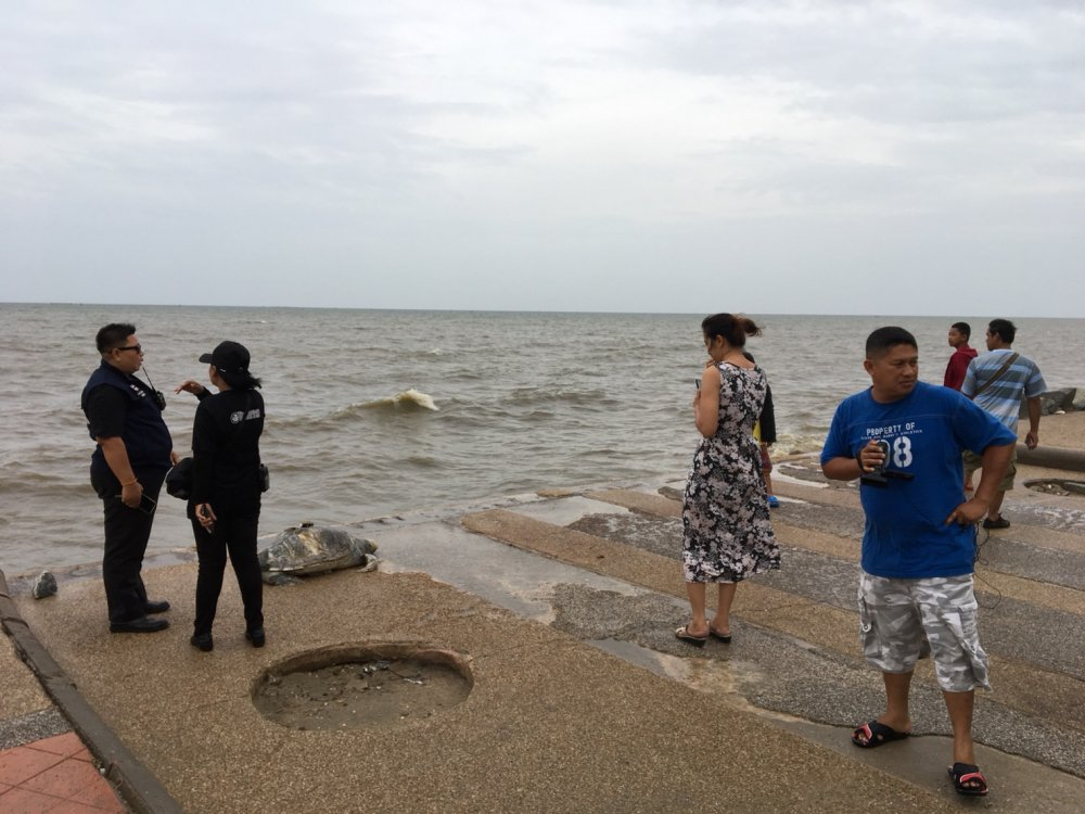The carcass of a 10-year-old green turtle was washed ashore at Won Napa Beach in Tambon Saen Suk, in Chon Buri's Mueang district, on Monday morning. Following the discovery of the turtle at 6am near a beachside restaurant, the Krua Kho Khao, municipality official Anutchida Pimpa went to initially inspect the 50-kilogram decomposing creature, whose shell had sustained a severe wound that might have been caused by a boat's propeller blade. She said her team would pass the carcass on to the relevant agency to probe the cause of death later.