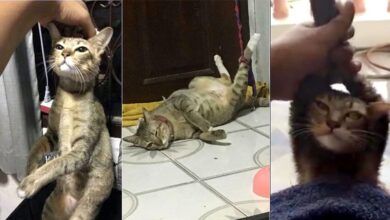 cat owner cruelty charge Cat owner Thailand Thailand on Watchdog Thailand on