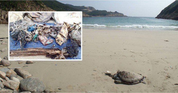 Dead Green Turtle found on Trat beach with plastic-stuffed stomach