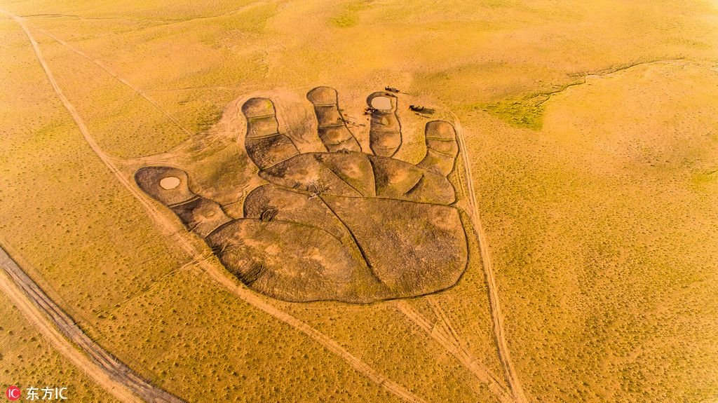 Giant 'Buddha's palm' appears in Inner Mongolia