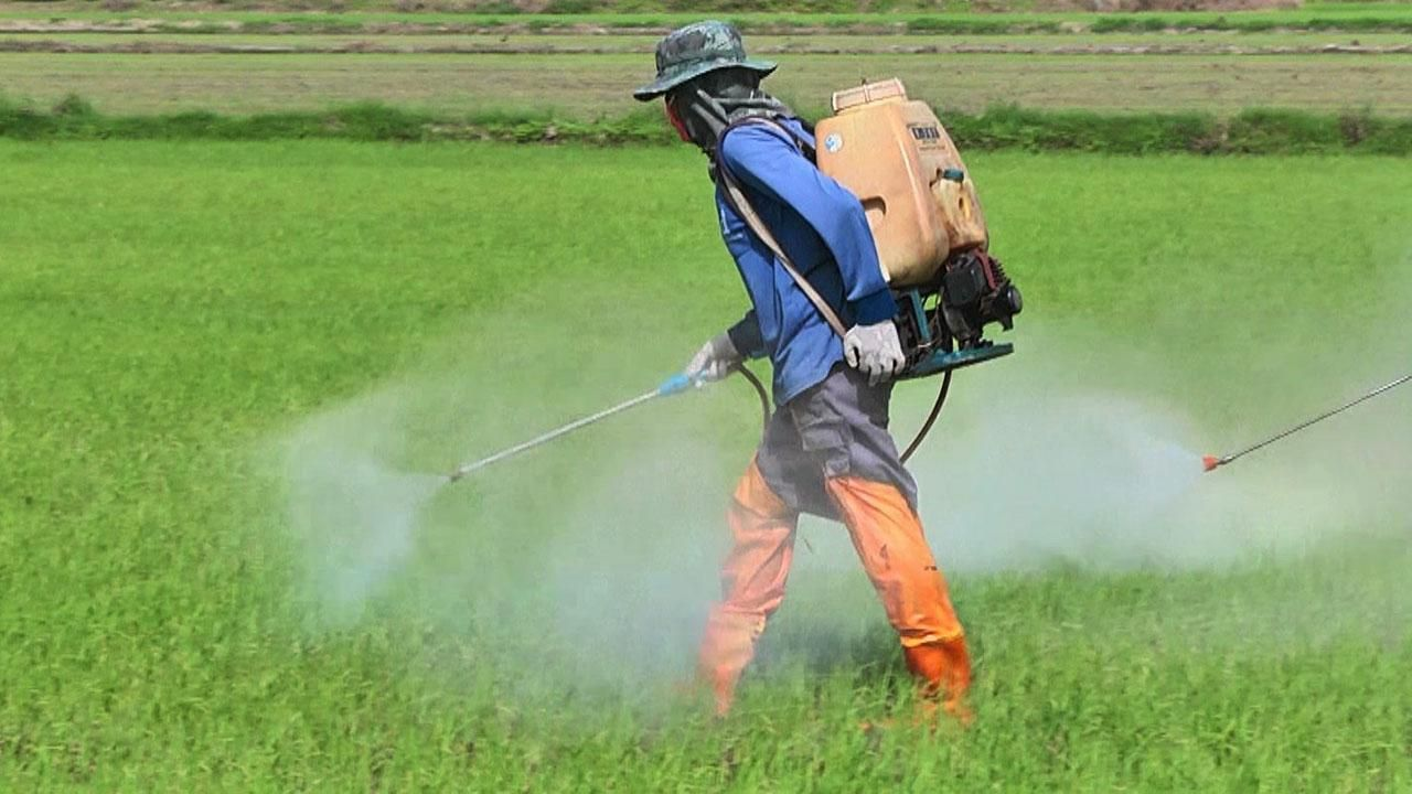 Toxic farm chemicals toll lives food thailand pattayatoday pattaya news