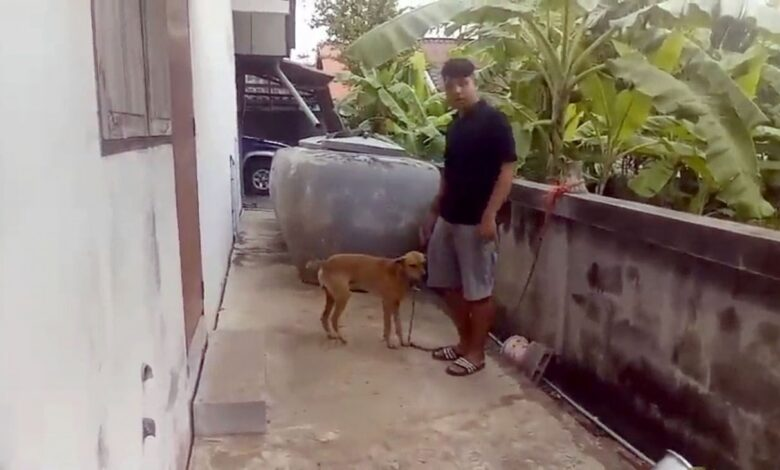 Chaiyaphum girl, age 4, dies from mauling by three local dogs. A four