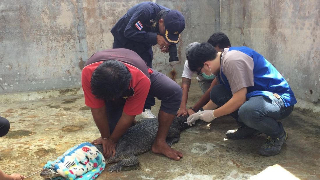 DNA tests reveal Phuket's Yanui is a …