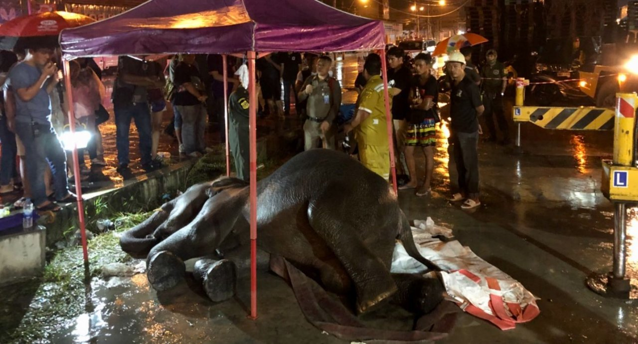 Elephant electrocuted in Samut Prakan while begging for food