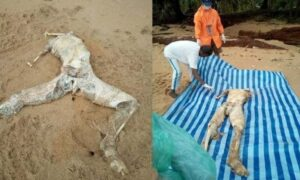 Headless corpse washes up on Thai island beach. Villagers on Koh Libong in Trang made a gruesome discovery yesterday when a headless