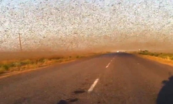 "Shocking video shows moment a crowd of insects fly to Russia like ""doomsday"""