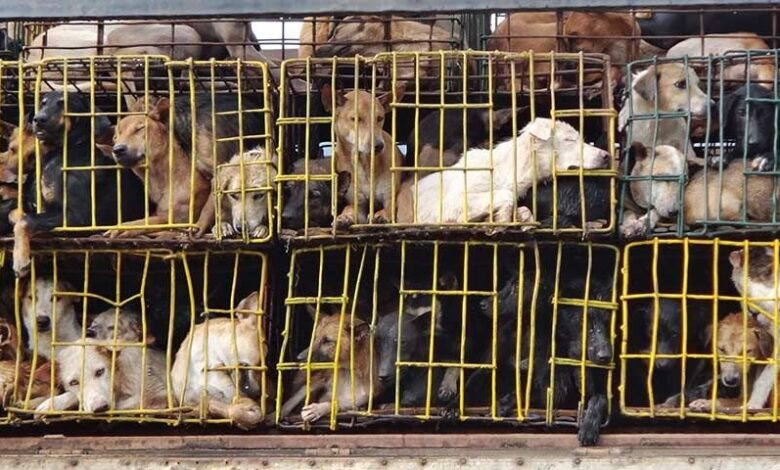 Soi Dog Foundation welcomes plan to ban dog meat trade in Hanoi. The Phuket-based Soi Dog foundation has welcomed the ban on the sale of dog meat in Hanoi.