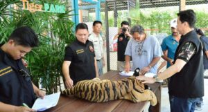 Thai farms investigated for alleged links to black market. Thailand's tiger facilities have come in for international scrutiny amid suggestions many farms