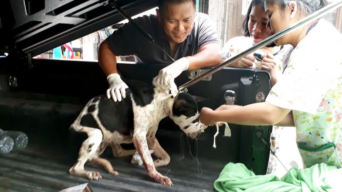 Street dog dies, others in veterinary care after shooting by unknown attacker in Rayong
