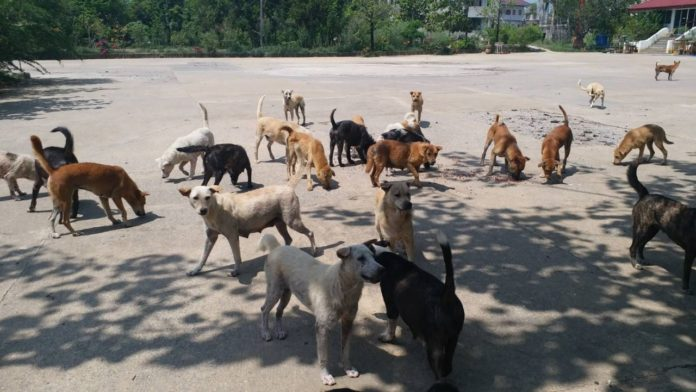 Two million stray cats and dogs by 2027