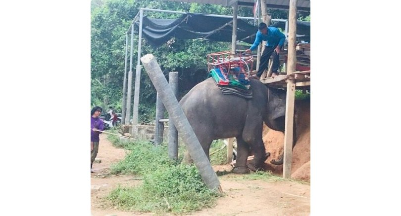 Canadian tourist injured after she falls from elephant ride. A 38-year-old Canadian tourist was injuredwhen her left leg was crushed by an elephant's trunk