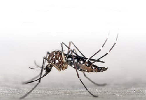 Control warns people in South about chikungunya fever