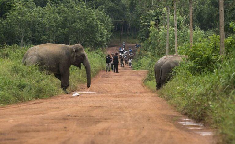 ELEPHANT FATALLY STOMPS DRIVER AFTER CAR STRIKES
