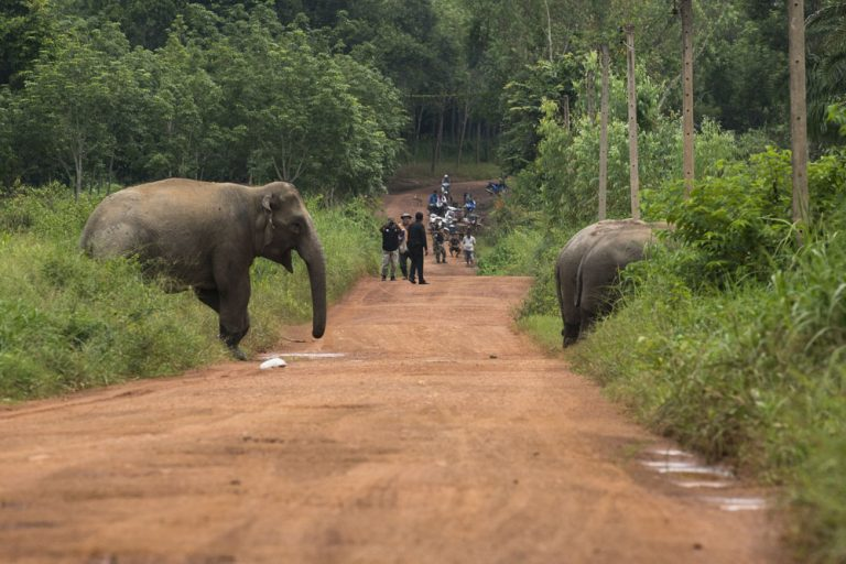 ELEPHANT FATALLY STOMPS DRIVER AFTER CAR STRIKES ITS LEGS