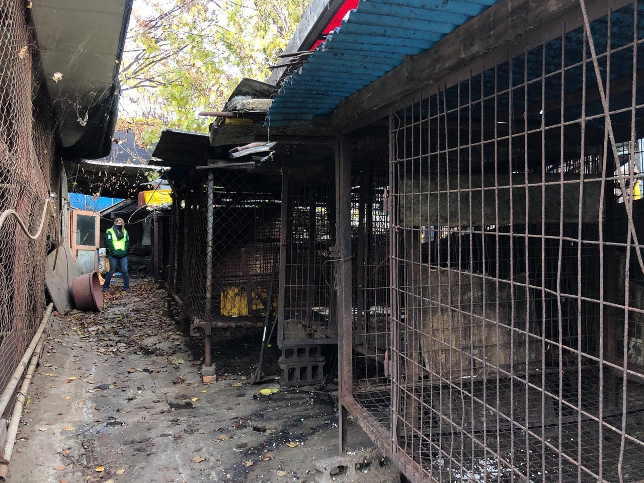 South Korea closes biggest dog slaughterhouse complex. South Korean officials on Thursday began to dismantle the country's largest canine slaughterhouse