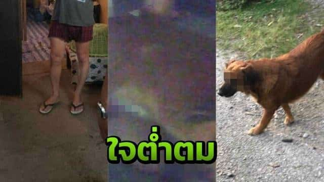 Thai cops bust 'sex with SOI DOGS' sleeze ring