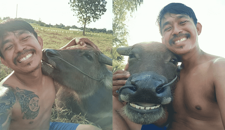 Viral selfies of Thai farmer and his beloved buffalo will warm
