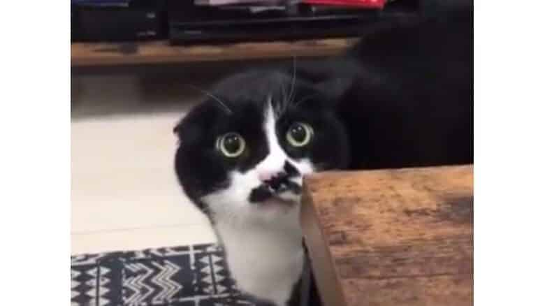 WATCH: Weird cat cries out 'loliloli' instead of 'meow'. Cats tend to make some weird sounds at night, especially when fighting or when there's a female