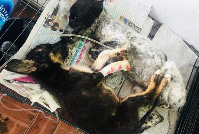 CATS & DOGS DIE BY HUNDREDS IN DISEASE-INFESTED BANGKOK SHELTER: RIGHTS GROUP