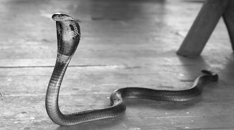 Citizen attacked by Cobra in a police station.
