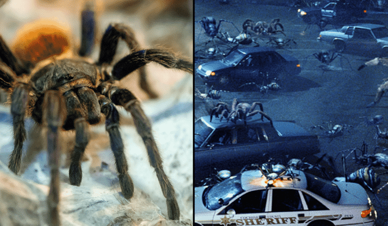If Spiders Worked Together, They Could Eat All Humans In A Year. Hey, here's some happy news for you to drift off to sleep with tonight - if all of the