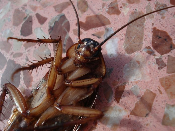 NO REALLY, DO NOT EAT COCKROACHES: THAI HEALTH DEPARTMENT