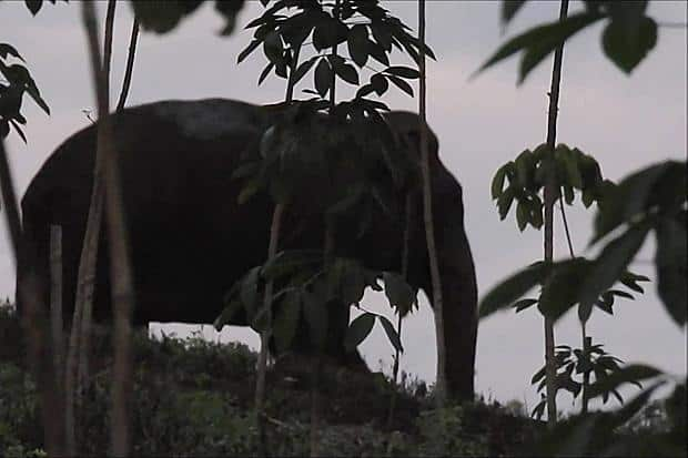 Rogue elephant warning in Thailand