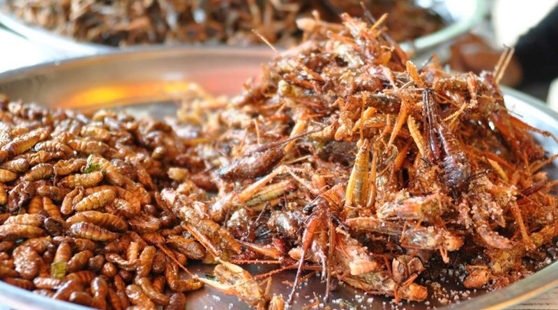 Switzerland in high demand for Thai bugs. Thailand is increasing its export of food grade bugs to Switzerland due to the rising demand.