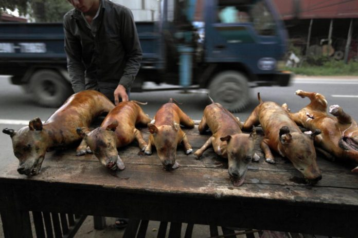 Vietnamese must stop eating dogs before F1 arrives. Vietnamese must stop eating dogs before Formula 1 arrives. Groups battling the dog meat trade have.