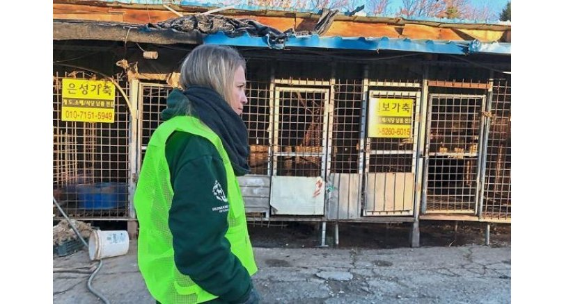 Animal rights group slammed for dog killings. The leader of one of South Korea's largest animal rights groups has been accused of secretly exterminating