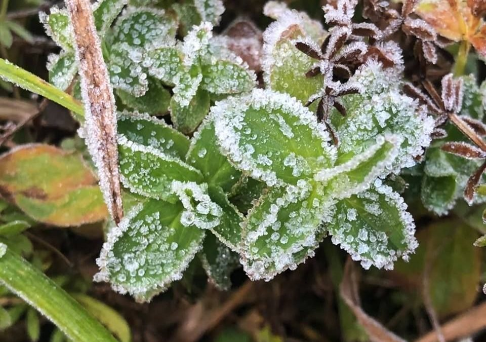 Chilly start to New Year on Doi Inthanon mountain