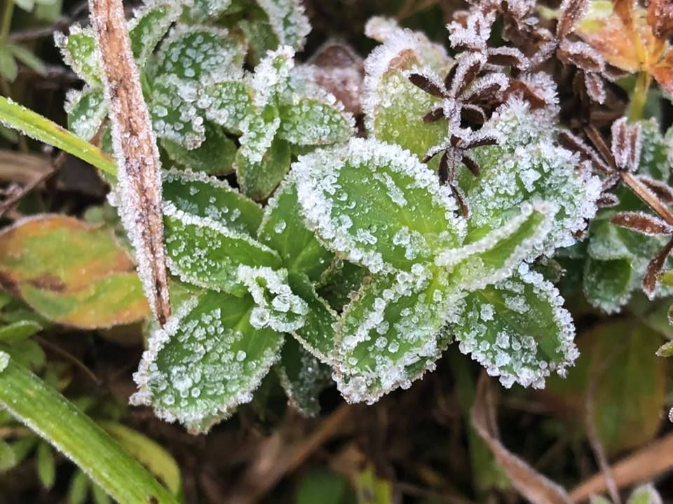 Chilly start to New Year on Doi Inthanon mountain. The first frost of 2019 formed atop Doi Inthanon mountain in Chiang Mai's Jom Thong district