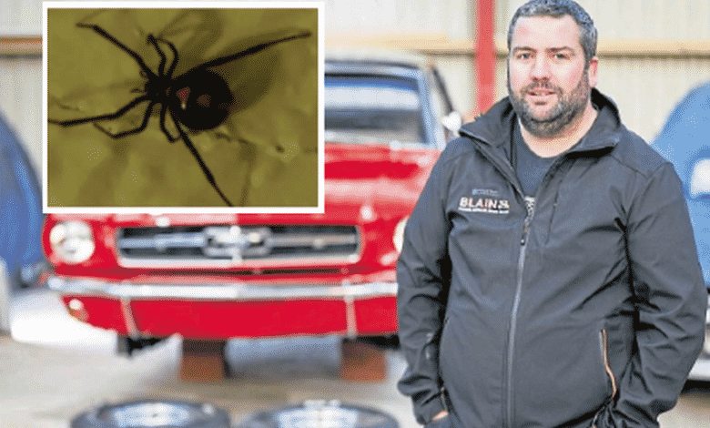 Deadly Black Widow spider found an inch from Dundee car nut's face as he renovated classic motor.A Scottish man had a lucky escape when he