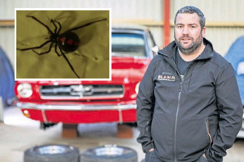 Deadly Black Widow spider found an inch from Dundee car nut's face as he renovated classic motor