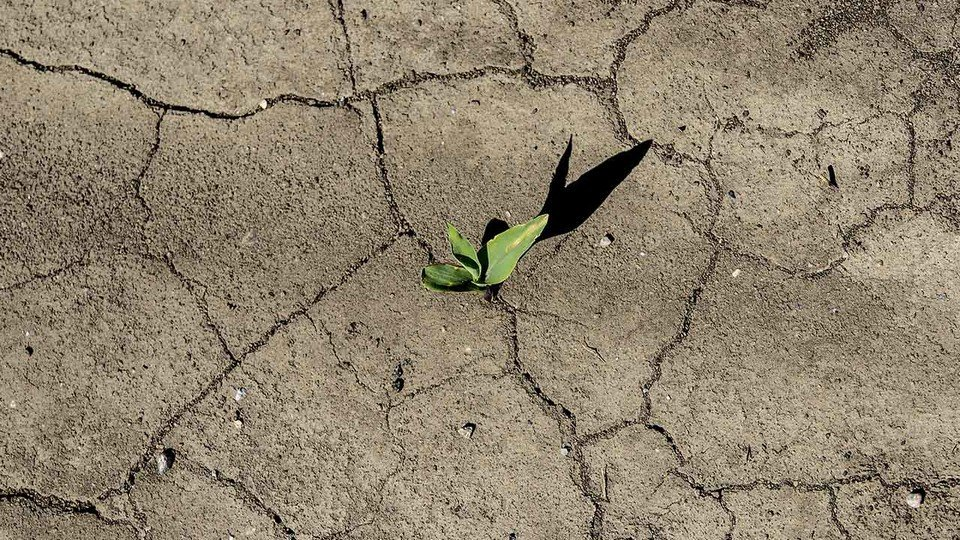 300 families in Si Sa Ket hit by early drought