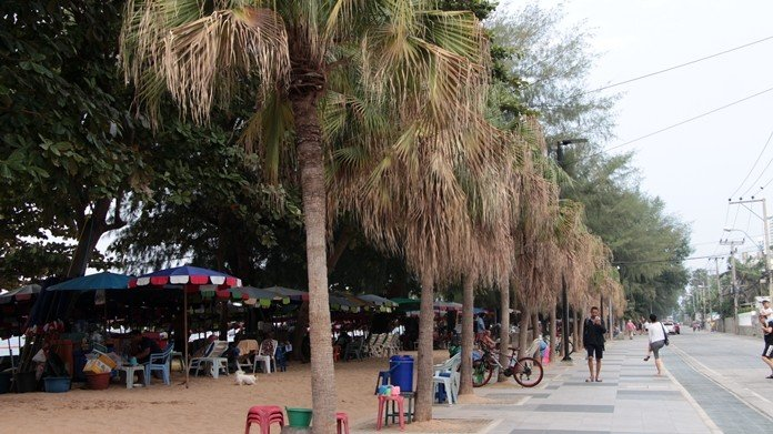 Angry Pattaya councilors order neglected Jomtien palm trees revived