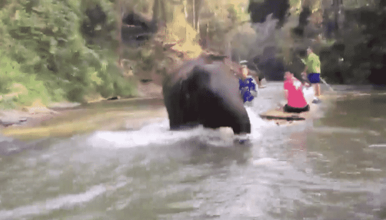 """Baby elephant calf runs into tourist raft in Chiang Mai. This story was shared by Facebook user """"Dechathorn Sastradechawait"""" on the 20th of this month."""