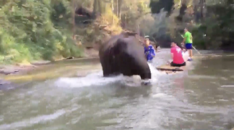 "Baby elephant calf runs into tourist raft in Chiang Mai. This story was shared by Facebook user ""Dechathorn Sastradechawait"" on the 20th of this month."