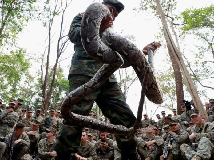 US troops drink blood from decapitated cobras in annual Thailand military exercise. the annual Cobra Gold military exercise, the biggest activity of its