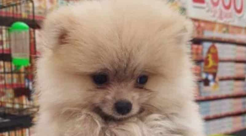 Netizens Criticize Big Supermarket giving out puppies as prizes