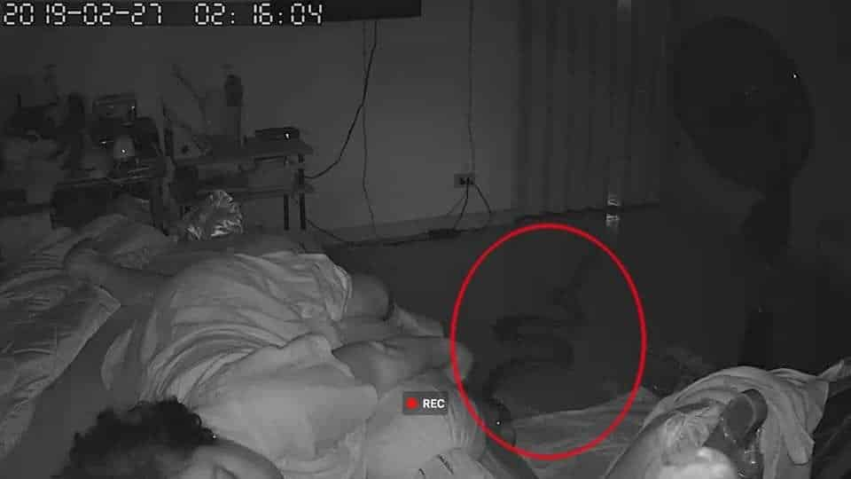 Snake slithers into Bangkok woman's bedroom