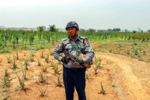 US man had Myanmar's permission to grow cannabis. The arrest of an American man in Myanmar for growing 20 acres of cannabis plants is unjust because