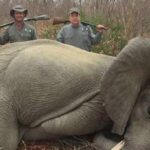"""""""cruel monsters"""" 'Shoot Dead Two Young Elephants. Two smirkinghuntsmenhave been slammed for allegedly shooting dead a young elephant and"""