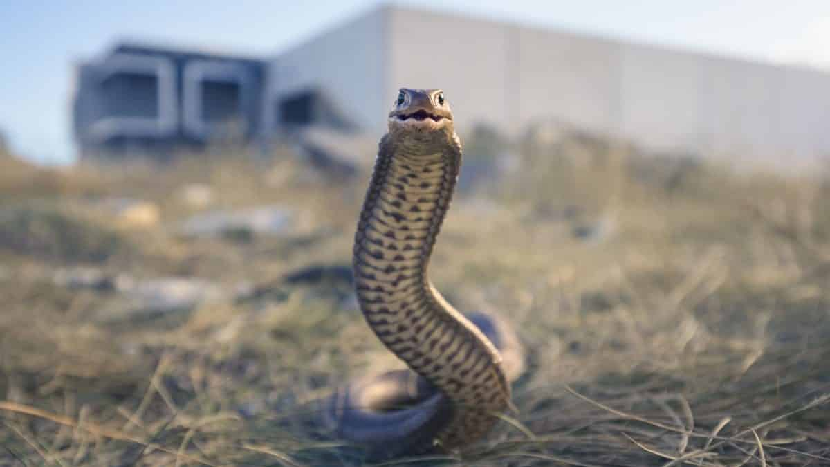 200 people killed by snakebites EVERY DAY