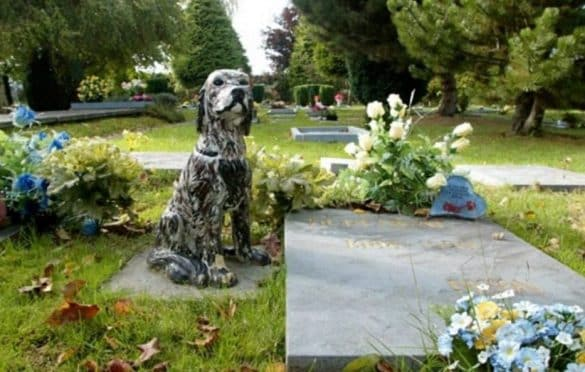 New Law Allows Pets To Be Buried Alongside Their Humans At Cemeteries. Options used to be limited for people who wanted to be buried with their.