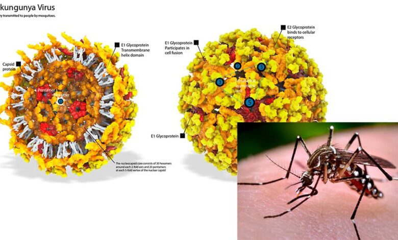 Singapore students down with chikungunya fever in Thailand. Thirteen students and a teacher from the School of the Arts were diagnosed with chikungunya