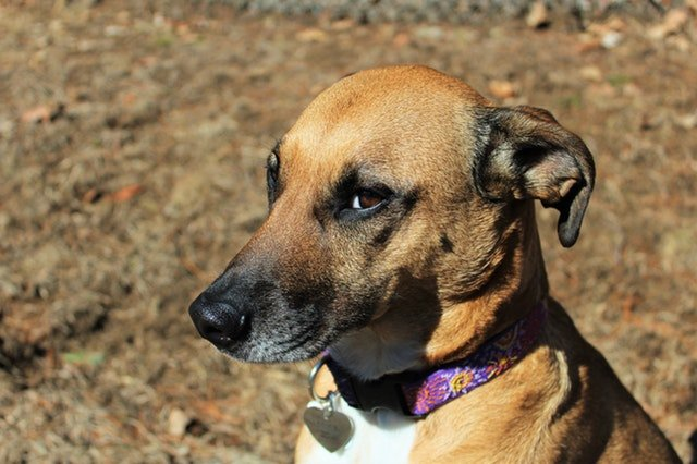 Studies Show That Dogs Can Sense 'Bad' People. The internet is littered with anecdotes of people whose dogs knew somebody was bad news before they did. Is