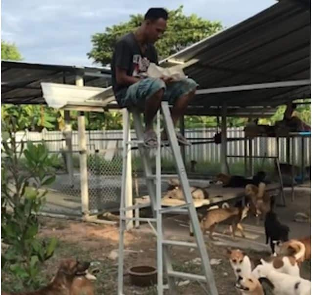 Thai man needs ladder to escape street dogs. Thai man, 40, is forced to eat his lunch on top of a LADDER to escape a hungry pack of Soi Dogs (Street Dogs)
