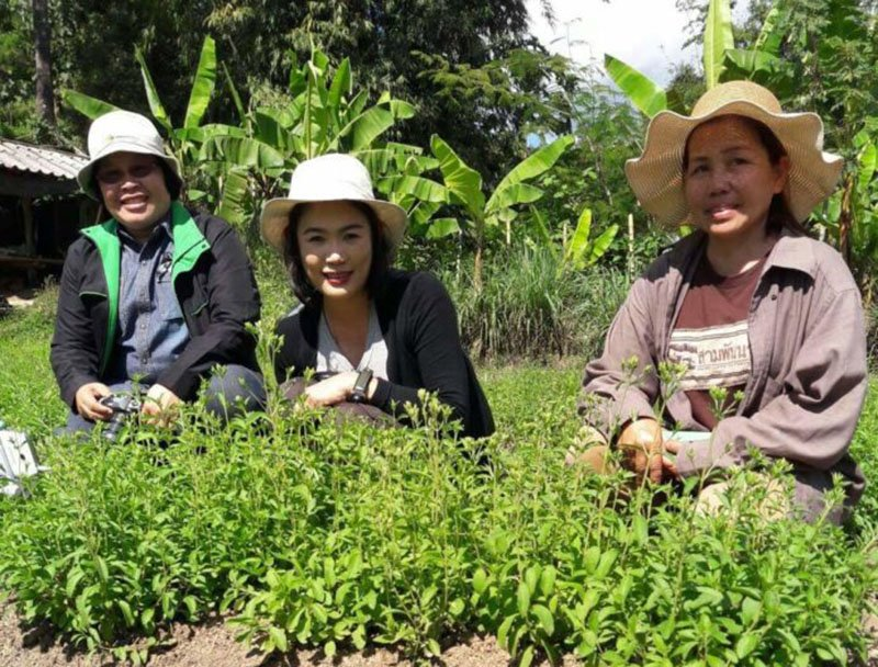 La-ong Sriwanna, right, with her stevia plants.