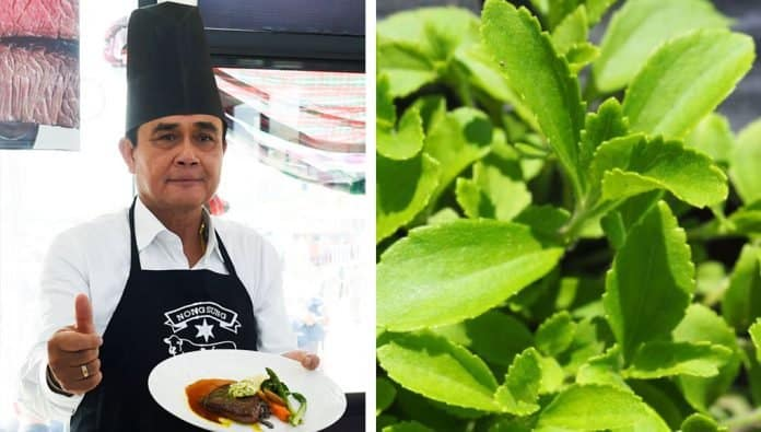 Prayuth Urges Thais to Use Stevia When Cooking